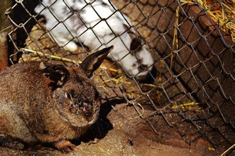 conigli in gabbia varese i cani nelle feci i conigli al buio i cuccioli