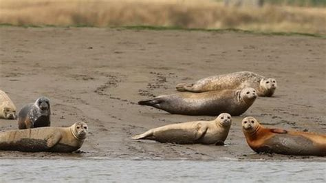 thames river animals hundreds of seals found in london s river thames cbbc