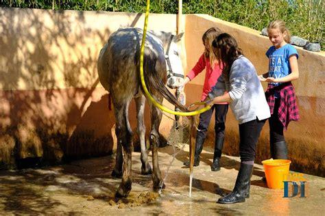 Tas Fashion Cewe Auris 256008 el contacto con animales mejora la autoestima y la motivaci 243 n