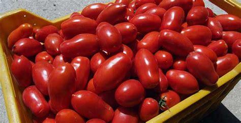 salsa pomodoro fatta in casa la salsa salentina fatta in casa la speciale