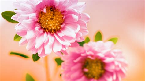 wallpaper hd pink flowers pink floral wallpapers hd wallpapers id 11088