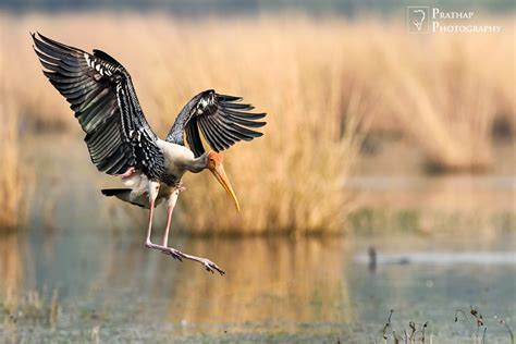 Best Photography by Prathap Photography Best Of 2015 Goals For 2016