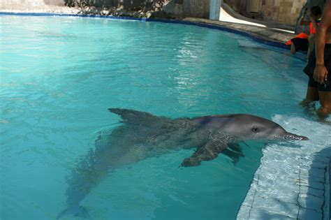 In A by File Dolfin In A Pool Jpg Wikimedia Commons