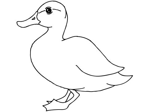 Coloring Page Duck by Free Printable Duck Coloring Pages For Animal Place