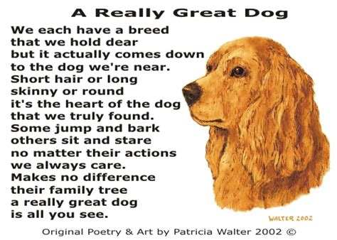 The Story Of Dogs a really great by walter