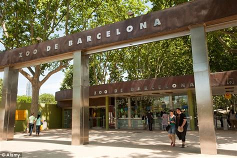 barcelona zoo opening times man who was mauled by lion at barcelona zoo pictured