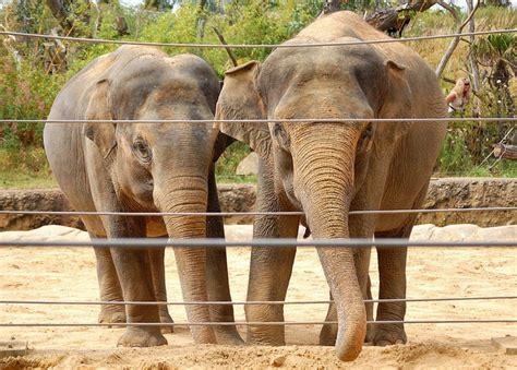 imagenes de animales del zoologico el zoologico de animales related keywords el zoologico
