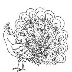 National Bird Of India Outline by 1000 Ideas About Peacock Drawing On Doodles Feathers And Peacock