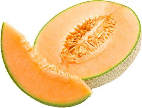 manfaat buah melon bagi kesehatan tubuh resep masakan