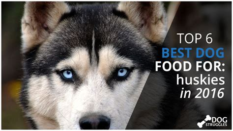 best food for huskies top 6 best foods for huskies in 2017 dogstruggles