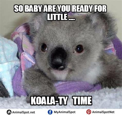 Koala Bear Meme - koala memes