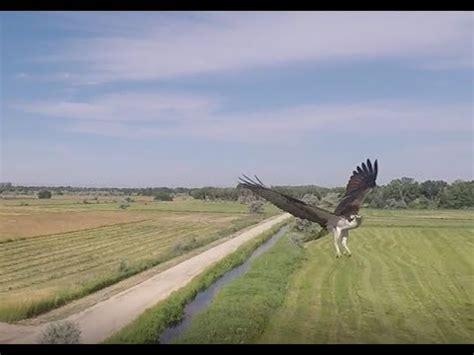 Gopro 4 Jpc barth by drone doovi