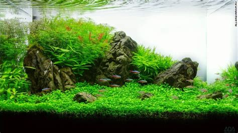 aquascape qatar pimp my fish tank this is the eerie beautiful world of