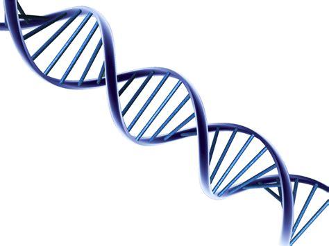 art design genetic screens las terror 237 ficas consecuencias de insertar genes de otras