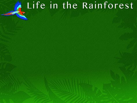 Life In The Rainforest Powerpoint Template Adobe Rainforest Powerpoint