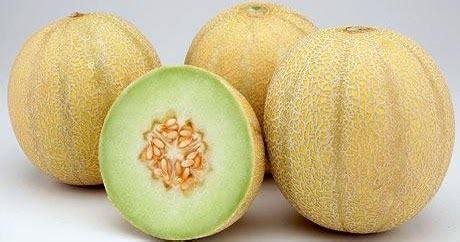 Pupuk Hormonik Nasa panduan budidaya melon