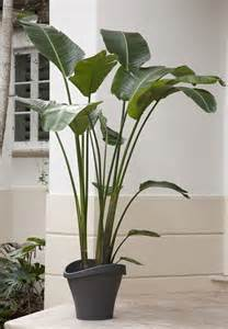 large house plants gallery for gt large leaf house plants