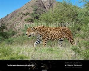 Prehistoric Jaguar Panthera Gombaszoegensis Georgica