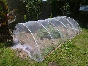 vegetable garden row covers garden diary 5 15 2013 experimenting w tulle fabric row cover to keep out insects bugs