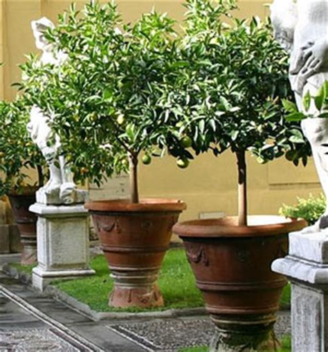 Small Trees For Planters by The Best Pots For A Term Container Planting