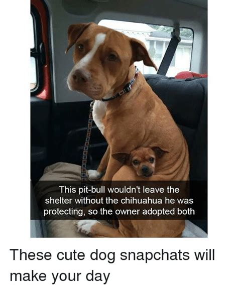 Make Your Day Cutest Pets by This Pit Bull Wouldn T Leave The Shelter Without The