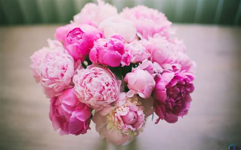 Pink Peonies Gomi | pink peonies gomi home design www bombabait com pink