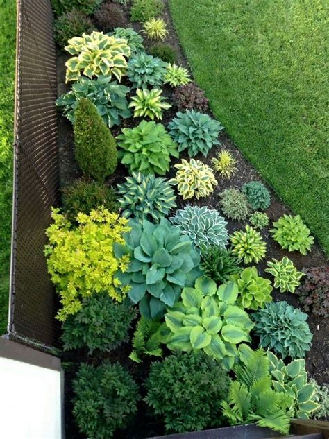 plant ideas for backyard 1000 ideas about low maintenance plants on