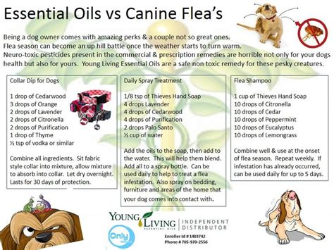 essential oils for fleas on dogs if this works for cats essential oils
