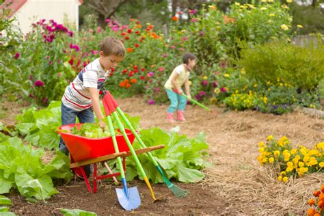 family gardens  kids gardening ideas hgtv