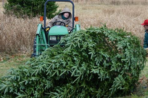 dana freeman travels choose and cut vermont christmas tree