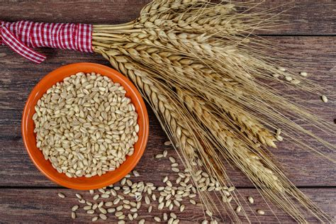whole grains 101 whole grains 101 the miracle food