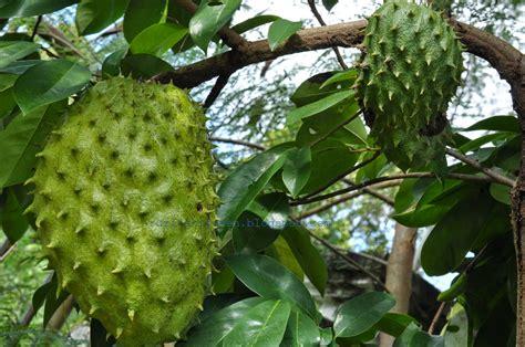 ruzitas kitchen durian belanda