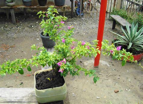 pin bunga kantil  pinterest