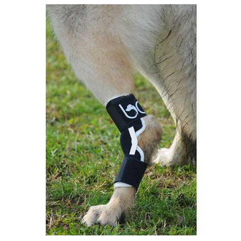 braces for dogs knee braces or supports images