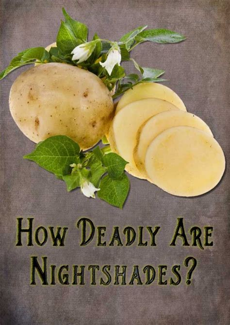 Nightshade Detox Symptoms by How Deadly Are Nightshades Eggplants Arthritis And