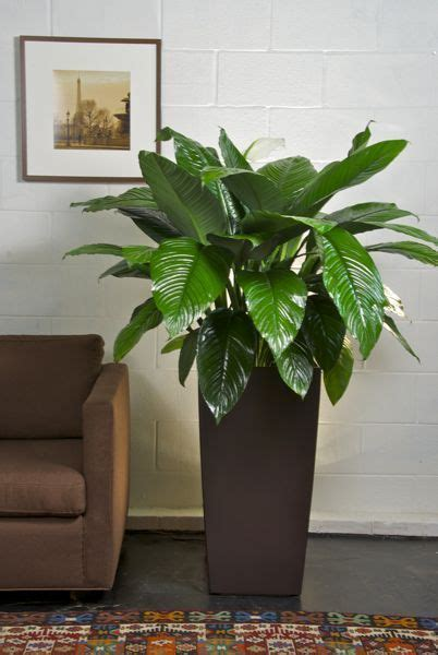 in door plants pot video three four plants argements tendencia en floreros gigantes para decorar interiores