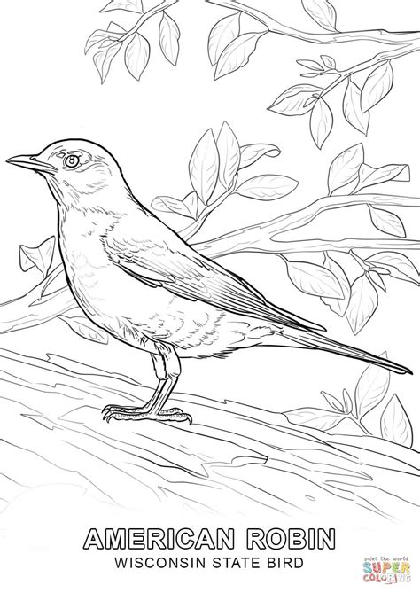 coloring page of florida state bird wisconsin state bird coloring page free printable