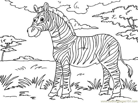 coloring page for zebra free coloring pages of cute baby zebra