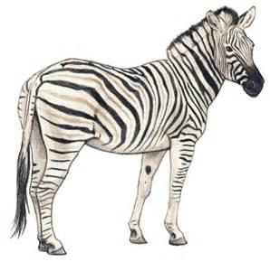 animals silvercrossfox