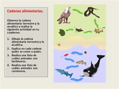 cadenas alimenticias y acuaticas trabajo de ciencias naturales ppt video online descargar