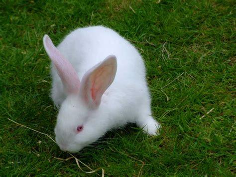 imagenes animales que saltan conejo nodolab