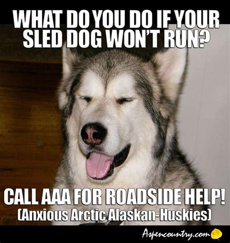 Dog Jokes Meme - 107 best images about joking dog on pinterest jokes dog