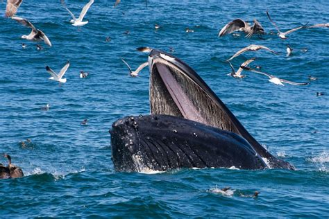 monterey whale watching boats april 2017 whale watching in monterey bay blue ocean