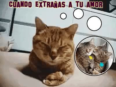 imagenes de amor con gatos gif by demic find share on giphy