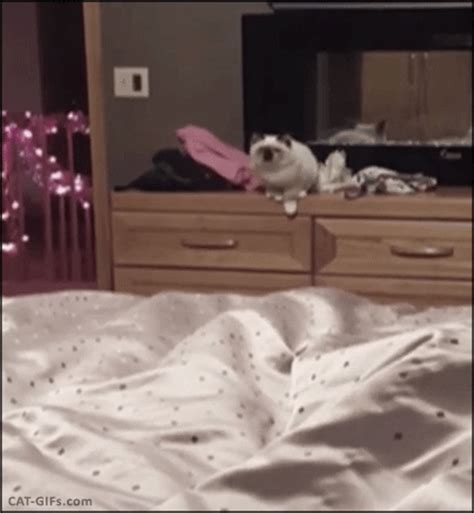 bed gif summer vacation as told by cats