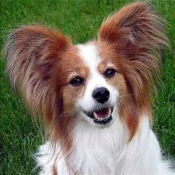 top 10 best small breeds in the world these are