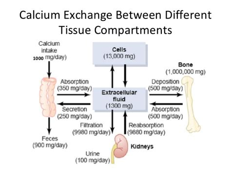 substance p supplement calcium metabolism vitamin d parathyroid hormone