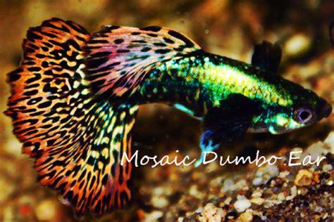 Permalink to Koi Fish Aquarium Live Wallpaper – Live Wallpaper Windows 10 Fish   WallpaperSafari