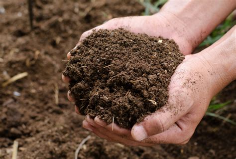 Coffee Grounds Compost – Compost Worms and Coffee Grounds   Ground to Ground