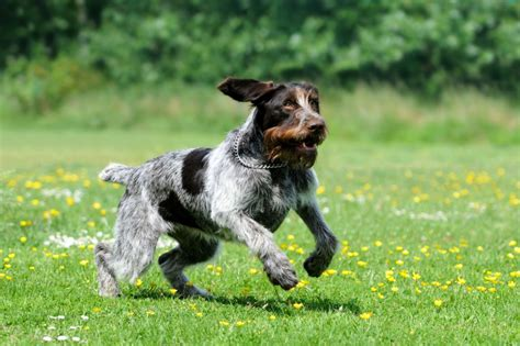 Hyperactive Dogs | calming down a hyperactive dog pets4homes